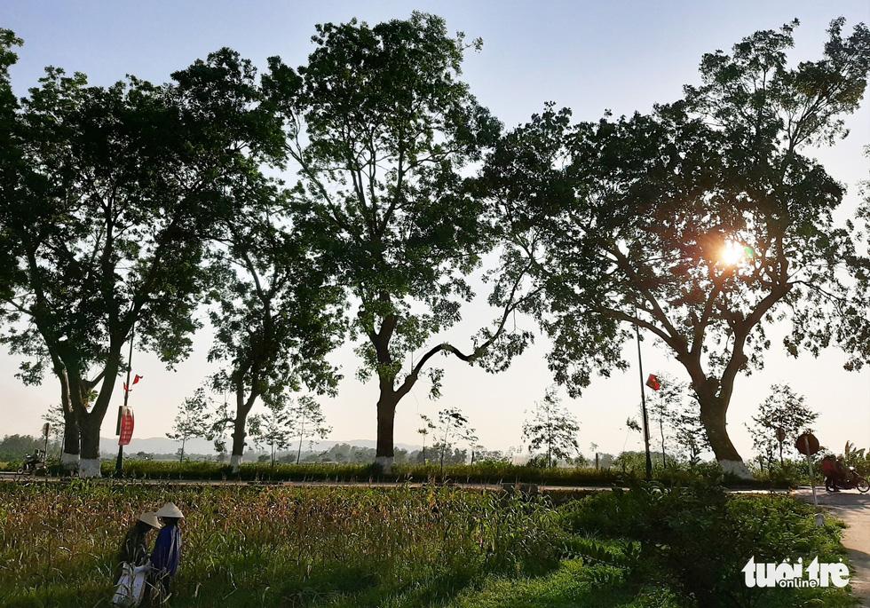 Hàng cây tỏa bóng mát trên quê hương Chủ tịch Hồ Chí Minh - Ảnh: DOÃN HÒA