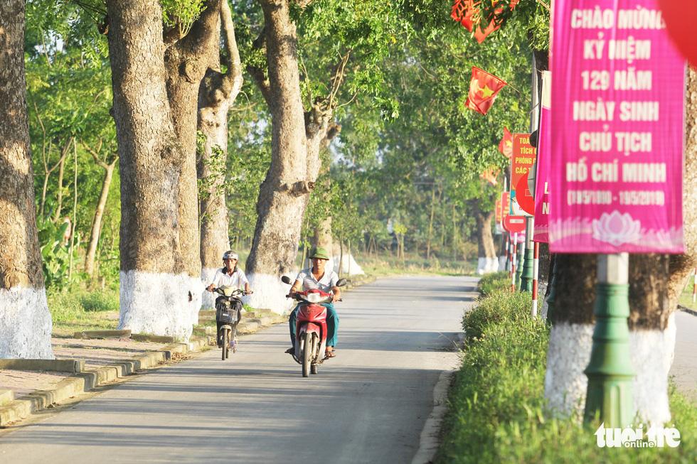 Những ngày tháng 5 đúng dịp kỷ niệm 129 năm Ngày sinh Chủ tịch Hồ Chí Minh, hàng cây xà cừ được trồng hơn nửa thế kỷ vẫn tỏa bóng mát - Ảnh: DOÃN HÒA