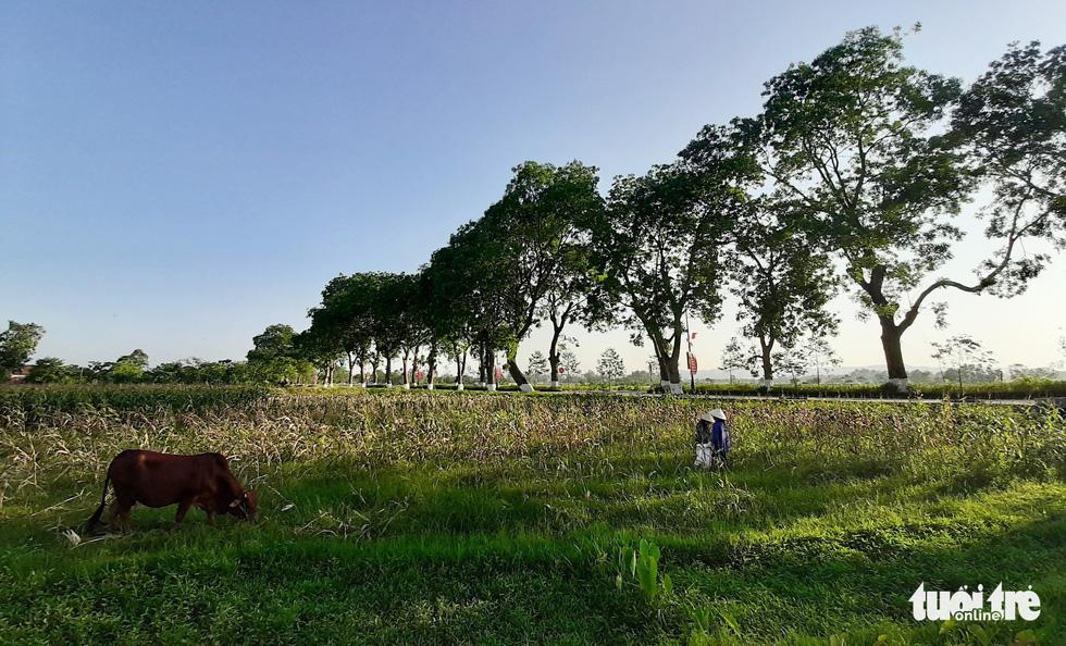 Cảnh vật đồng quê bình dị trên quê hương Bác Hồ - Ảnh: DOÃN HÒA