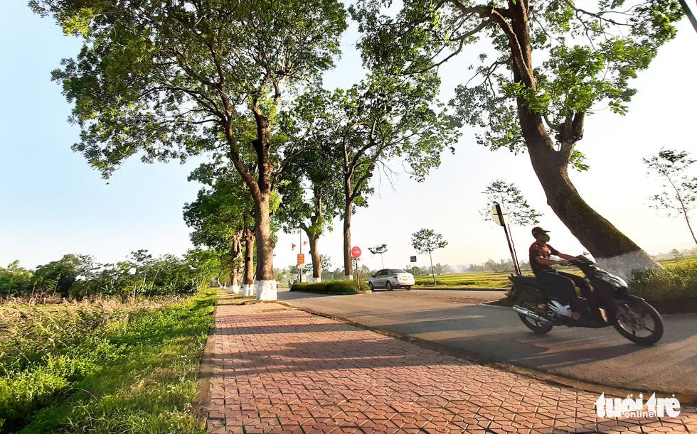 Hàng cây được trồng từ quốc lộ 46 đi vào quê ngoại, sang quê nội Bác Hồ rồi trở lại quốc lộ 46, thành một hình vòng cung - Ảnh: DOÃN HÒA