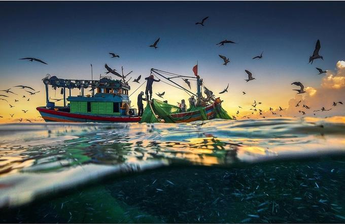"""Ngày hy họng"""" chụp quang cảnh ngư dân đánh bắt cá cơm ngần của nhiếp ảnh gia Trần Bảo Hòa tại vùng biển Bình Định - Phú Yên. Luồng cá thân trắng muốt có thể nhìn rõ dưới làn nước biển, trên trời là đàn chim hải âu."""