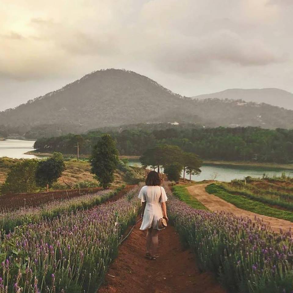 hoa lavender - dalat-ivivu-1