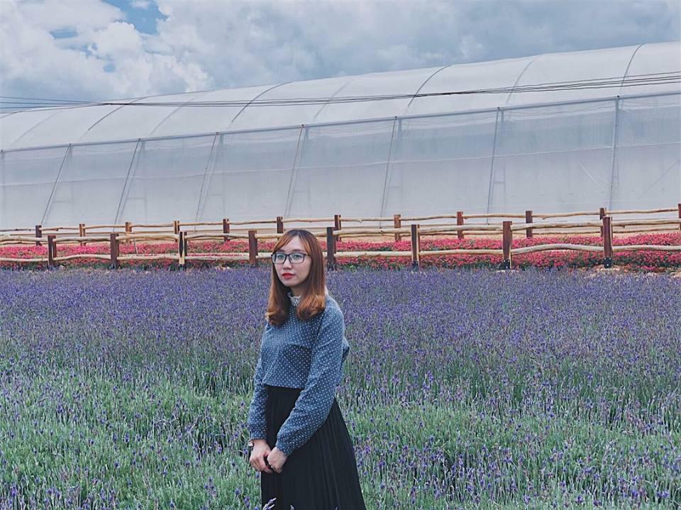 hoa lavender - dalat-ivivu-4
