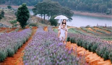 hoa lavender - dalat-ivivu-6