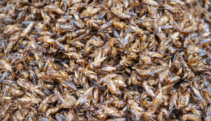 Dế chiên giòn  Tương tự như nhện hoặc bọ cạp, vẻ bên ngoài của món dế chiên không bắt mắt và làm nhiều người e ngại khi thưởng thức. Đầu bếp thường chiên dế cùng với tỏi ớt để có mùi thơm hấp dẫn. Những con dế mập mạp, có vị béo như tôm sú, ngọt như thịt cua, được cho là chữa được nhiều bệnh như đau nhức, tê thấp, béo phì… Ở Việt Nam, món ăn cũng phổ biến ở một số tỉnh miền Tây. Ảnh: Ballz.