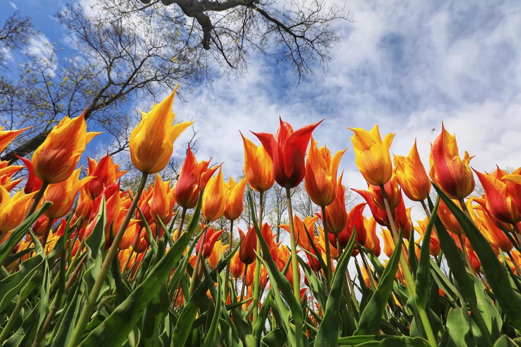 Thổ Nhĩ Kỳ còn được biết đến là nơi đặt hạt giống đầu tiên của hoa tulip với 2.000 loại hoa khác nhau trồng khắp nơi ở Istanbul.