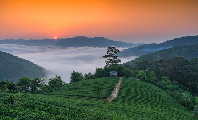 Đồi chè Cầu Đất, nằm ở xã Xuân Trường, cách trung tâm thành phố Đà Lạt khoảng 20 km về hướng đông nam. Những đồi chè xanh ngát cùng không gian thoáng mát là nơi thích hợp để săn ảnh. Sáng sớm, bạn có cảm giác phiêu du trên những tầng mây trong ánh bình minh rực đỏ; bên dưới là hàng chè xanh thấp thoáng trong làn sương mờ ảo.
