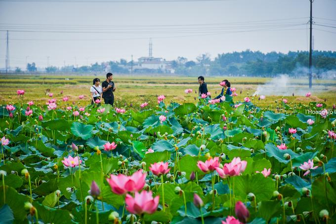 Nhờ khung cảnh thơ mộng, ao sen làng La Chữ trở thành điểm chụp ảnh nhiều bạn trẻ tìm đến.