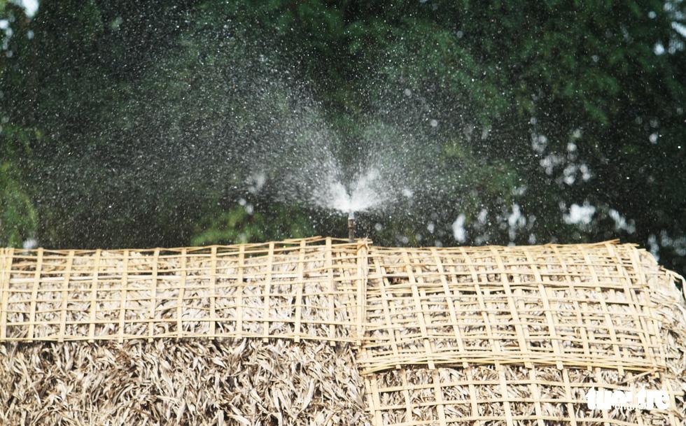 Đều đặn mỗi ngày mái tranh đều được phun nước làm mát, tránh cháy - Ảnh: DOÃN HÒA