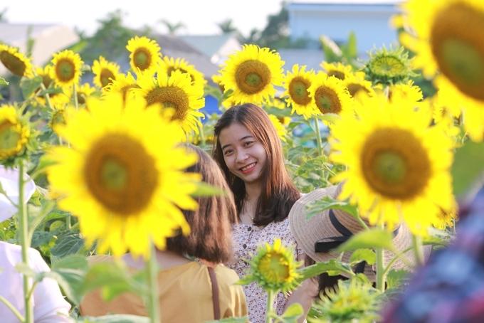 Vườn hoa được trồng hai tháng trước và mở cửa đón khách từ ngày 26/4. Mỗi ngày, nơi này thu hút hơn 1.000 lượt khách tham quan, giá vé 20.000 đồng mỗi người.