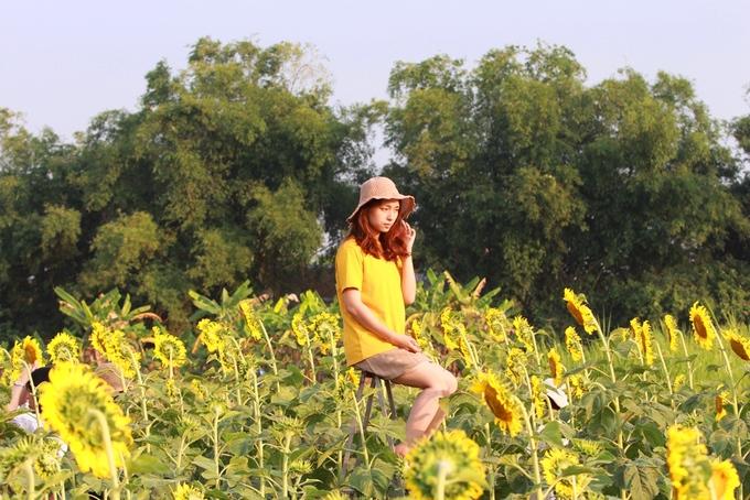 Nhiều bạn trẻ cho biết hình ảnh vườn hoa hướng dương được chia sẻ rộng rãi trên mạng xã hội nên đã tìm đến.