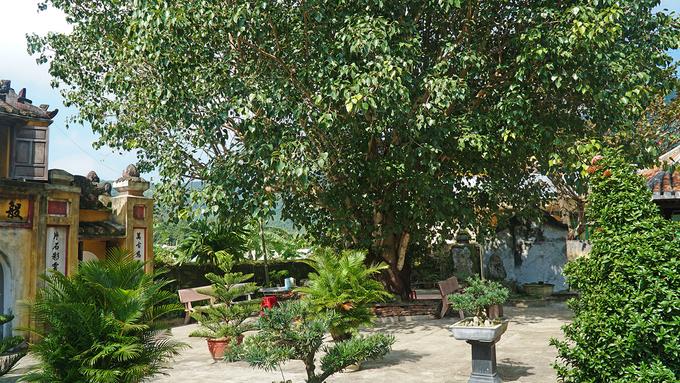 Khuôn viên chùa không quá rộng nhưng được phủ xanh bởi cây cối um tùm.
