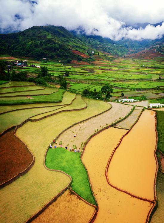 Những gam màu khác nhau trên ruộng bậc thang Tú Lệ, nằm giữa 3 ngọn núi cao Khau Phạ, Khau Thán và Khau Song.