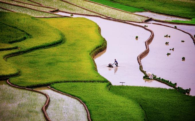 """Trước khi vượt """"sừng trời"""" (đèo Khau Phạ), Tú Lệ hiện ra với gam màu xanh của lúa đã cấy xong khiến nhiều du khách phải dừng chân."""