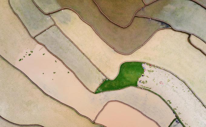 Mùa nước đổ Tú Lệ phản chiếu như gương trời, đẹp không thua kém so với mùa nước đổ Sa Pa (Lào Cai) hay Hoàng Su Phì (Hà Giang).