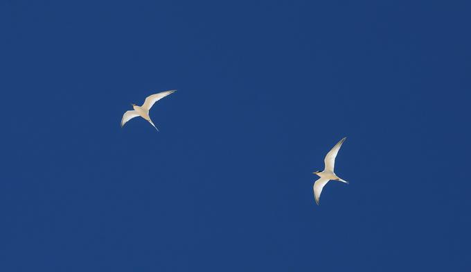 Khu vực này cũng là nơi sinh sống của hàng trăm loài chim, chủ yếu tập trung ở rừng ngập mặn Cồn Chim nằm giữa đầm Thị Nại.