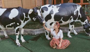 nong-trai-Dairy-Farm-hot-nhat-Moc-Chau-ivivu-1