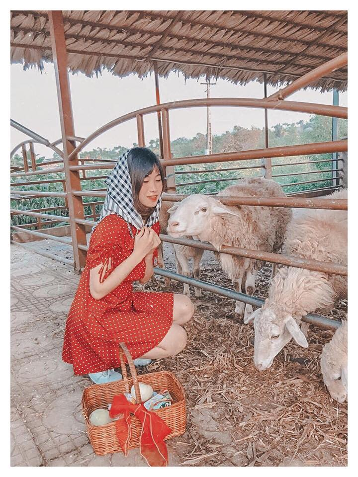 nong-trai-Dairy-Farm-hot-nhat-Moc-Chau-ivivu-2