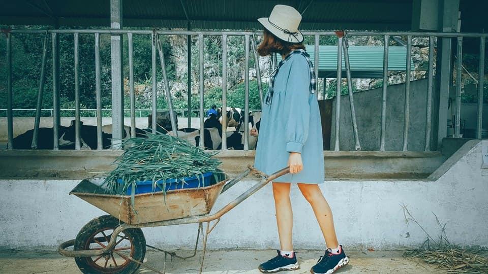 nong-trai-Dairy-Farm-hot-nhat-Moc-Chau-ivivu-5