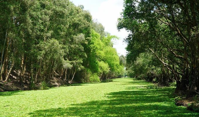 Ngoài mùa sen, thời gian lý tưởng để ghé thăm nơi này là mùa nước nổi (khoảng tháng 10, 11) khi con nước tràn về, mang theo sự trù phú và màu mỡ cho vùng đất phương Nam. Từ ngoài bến, du khách sẽ được đưa vào rừng tràm bằng thuyền máy.