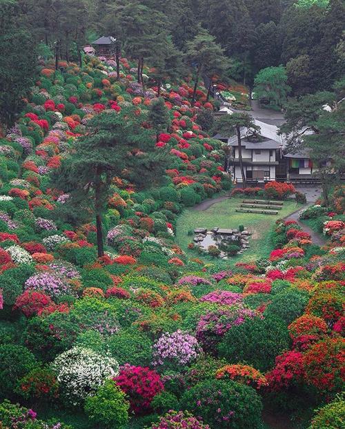 Shiofune Kannon-ji là ngôi đền Phật giáo 1300 năm tuổi nằm ở thành phố Ome, cách thủ đô Tokyo khoảng 1,5 tiếng di chuyển. Đây là một trong những điểm ngắm hoa đỗ quyên đẹp nhất quanh Tokyo. Ảnh: Lovely Nature.