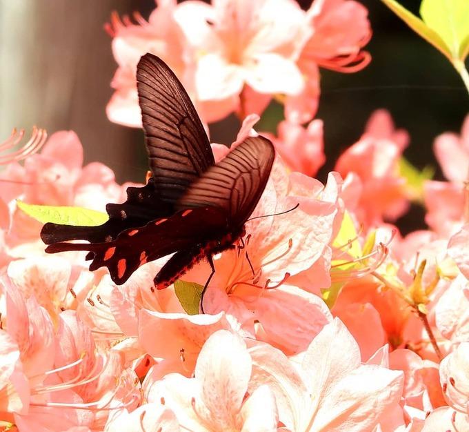 Loài hoa này có thể sống ở nơi có điều kiện khắc nghiệt. Ảnh: @nar.vhappy.