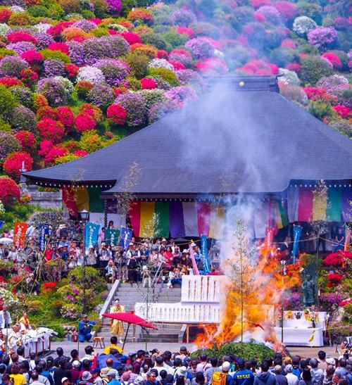 Lễ hội hoa đỗ quyên tại đền thường được diễn ra vào đầu mùa hè, thu hút hàng nghìn du khách tới tham gia. Năm nay lễ hội hoa đỗ quyên tổ chức từ ngày 8/4 đến 12/5. Ảnh: Tadahisa Hagiwara.