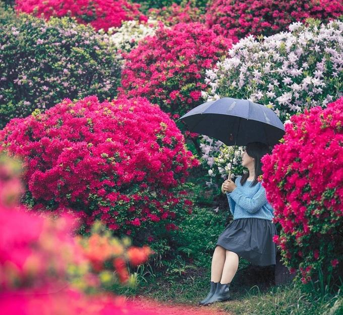 Những con đường ở quanh đền thích hợp để đi bộ, vừa dạo bước vừa vãn cảnh, ngắm hoa nở. Ảnh: @yurie.0101/Instagram.