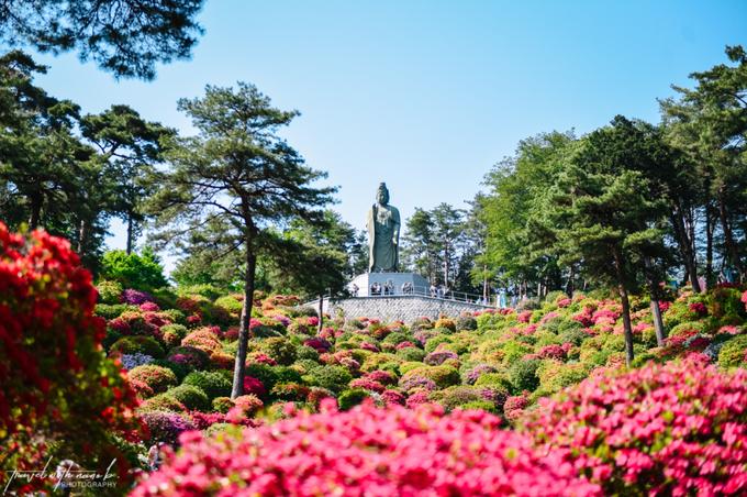 Du khách có thể leo tới chân tượng Phật bà Quan Âm để ngắm toàn cảnh khu đền với những đồi hoa đỗ quyên nhấp nhô nhiều sắc màu. Ảnh: Travel with Nano.