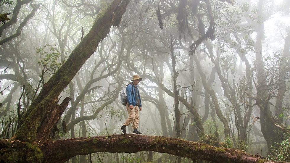 Cảnh đẹp như tranh vẽ của vương quốc rêu Tà Xùa - Ảnh: H.D.