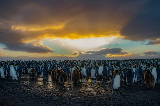 Vùng đất và biển phương nam, Pháp  Vùng đất và biển phía nam nước Pháp bao gồm các quần đảo Crozet, Kerguelen, Saint-Paul, Amsterdam và 60 hòn đảo ở Nam Cực là một trong 4 di sản thiên nhiên mới được UNESCO công nhận trong buổi làm việc ngày 5/7. Với diện tích hơn 67 triệu ha, khu vực này là nơi những loài chim và động vật có vú tập trung nhiều nhất, đặc biệt là số cá thể chim cánh cụt hoàng đế và hải âu mũi vàng lớn nhất thế giới. Ảnh: Picdeer.