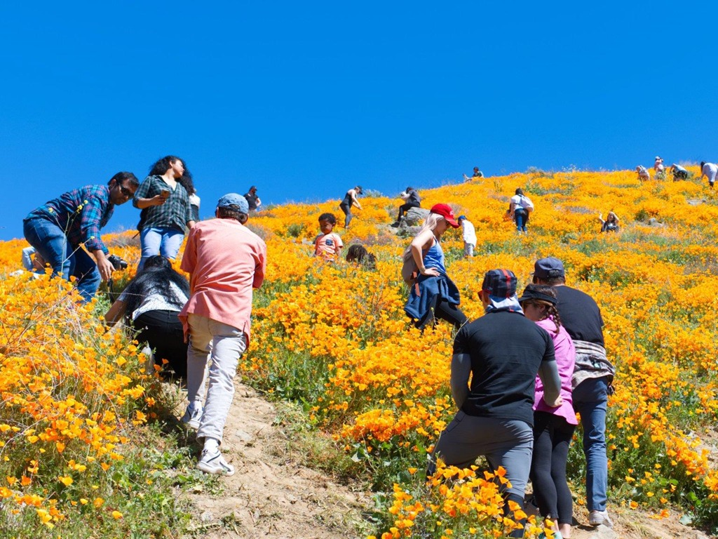 1. Thị trấn hồ Elsinore, California, Mỹ: Thị trấn hồ Elsinore nằm cách Los Angeles 100 km về hướng đông. Sau khi những cơn mưa lớn đổ xuống, cả thị trấn thay đổi rực rỡ với rừng hoa trải dài bát ngát. Chỉ trong vài ngày cuối tuần, 66.000 người đã kéo tới chụp ảnh gây tắc nghẽn, đồng thời giẫm nát hoa khiến nơi đây buộc phải đóng cửa vô thời hạn.