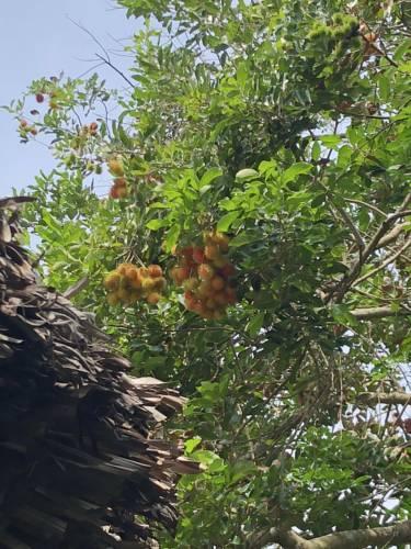 Le Jardin du Mékong - ivivu-4