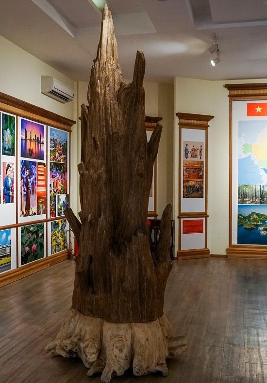 Bảo tàng trưng bày hơn 5.000 tư liệu, chia thành nhiều chủ đề như: nghiên cứu của thế giới về trầm hương, bản đồ phân bố trầm hương, trầm hương với tín ngưỡng, những sản phẩm của trầm hương... Nổi bật trong bảo tàng là những khối trầm hương lớn đặt tại sảnh chính, có tuổi đời cả trăm năm.