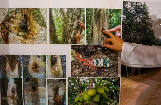 Trong bảo tàng treo nhiều hình ảnh về cây dó bầu, sự hình thành trầm hương. Các khu vực khác giới thiệu tác dụng của trầm hương trong sức khỏe, phong thủy, tâm linh, tín ngưỡng... Theo bản đồ phân bố, tỉnh Khánh Hòa là khu vực có chất lượng trầm hương vào loại tốt trên thế giới.