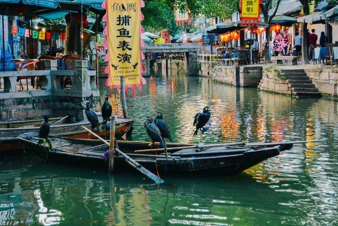 """Không chỉ có kênh rạch, Đồng Lý còn có Thoái Tư Viên, một vườn cổ điển Tô Châu được xây dựng từ 1885-1887. Đây là một phần của Tô Châu Viêm Lâm - di sản thế giới được UNESCO công nhận. Dù nhìn từ góc độ nào, thị trấn cũng mỹ lệ, thoát tục với sự kết hợp hài hòa của sông nước và kiến trúc đá cổ. Thậm chí, nơi này còn từng được ca tụng là """"Venice của phương Đông"""".  Đồng Lý vẫn giữ được nhiều ngôi nhà xây dựng từ thời Minh và Thanh với lịch sử hơn 600 năm."""