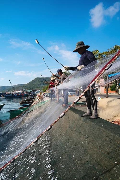 Mùa cá cơm kéo dài từ tháng 2 đến tháng 8 âm lịch hàng năm. Khách tham quan đến cảng vào buổi sáng, khi những tàu đánh cá trở về, sẽ bắt gặp cảnh người dân đập lưới, giũ cá. Khi ghe cập bến, từng cuộn lưới đầy cá cơm được rải ra và kéo giăng kín từ ghe qua bờ kè, tạo thành lòng ô chảo. Các ngư dân lúc này sử dụng một cây gậy dài gắn miếng xốp ở đầu, liên tục đập vào lưới để cá rơi xuống tấm lưới đã trải sẵn bên dưới. Ảnh: Phạm Hưng.