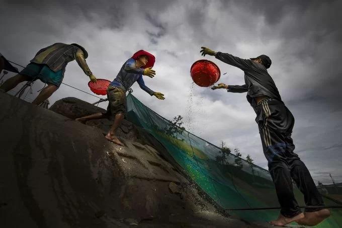 Ngư dân chỉ việc đưa rổ xuống xúc cá rồi vận chuyển cho người kế tiếp lên bờ. Ảnh: Nguyễn Hoài Văn/Your Shot National Geographic.