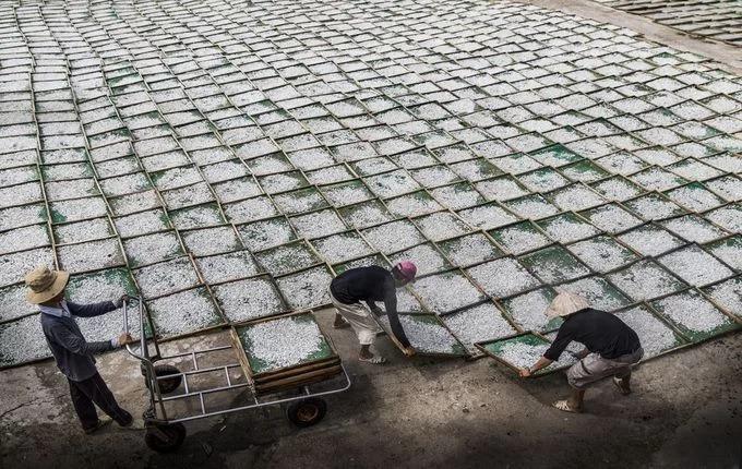 """Cá cơm sau khi thu hoạch có thể được phơi khô trên các khung mành lưới (ảnh). Một ngư dân có kinh nghiệm gần 40 năm bám biển cho biết nghề giũ lưới cá cơm thất thường, phải tùy theo luồng cá nhiều hay ít, mỗi tháng thuyền viên kiếm được khoảng 6 triệu đồng. """"Dù cực khổ, chúng tôi vẫn yêu nghề, gắn bó cuộc đời với biển"""", người này nói. Ảnh: Nguyễn Hoài Văn/Your Shot National Geographic."""