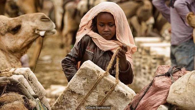 Công việc chính của người Afar là khai thác muối từ các hồ khoáng chất của Danakil và vận chuyển chúng qua sa mạc bằng lạc đà. Ảnh: BBC.
