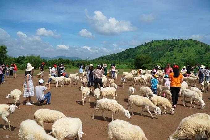 Đồng cừu ở xã Suối Nghệ thuộc huyện Châu Đức, tỉnh Bà Rịa - Vũng Tàu. 6h sáng, đồng cừu bắt đầu mở cửa, đến khoảng 10h chật kín du khách. Xe du lịch đậu kín lối vào. Cừu được người dân tập trung ở một bãi đất trống. Hiện có 2 chỗ cho du khách tham quan và thu phí 20.000 đồng tại khu vực này.  Cách đây hơn 4 năm, nơi này được người địa phương sử dụng để thả cừu ăn cỏ. Khi du khách khắp nơi đến tham quan và chụp ảnh đông dần, người dân mở thêm dịch vụ để phục vụ.