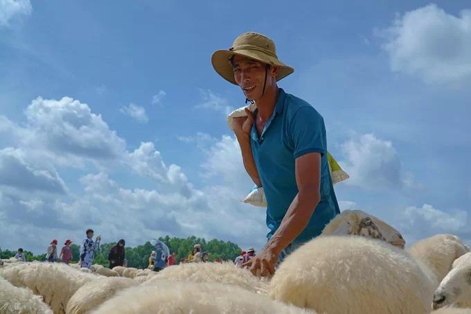 """Dưới ánh nắng gắt của miền biển, anh Thành dùng tay đánh vào mông những con cừu, miệng hô to """"hơ, hơ, hơ"""", để chúng không đi ra xa bầy. Đàn cừu anh đang chăm là một trong hai điểm thu hút đông khách nhất.  Anh cho hay, cả đàn có khoảng 230 con. """"Chúng tôi thả cừu vào 6h sáng mỗi ngày và đưa chúng về chuồng lúc 18h. Nhưng nếu còn khách và trời còn sáng, chúng tôi vẫn phục vụ"""", anh nói."""
