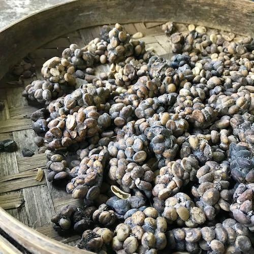 Cà phê luwak ở Bali. Ảnh: Phạm Huyền.