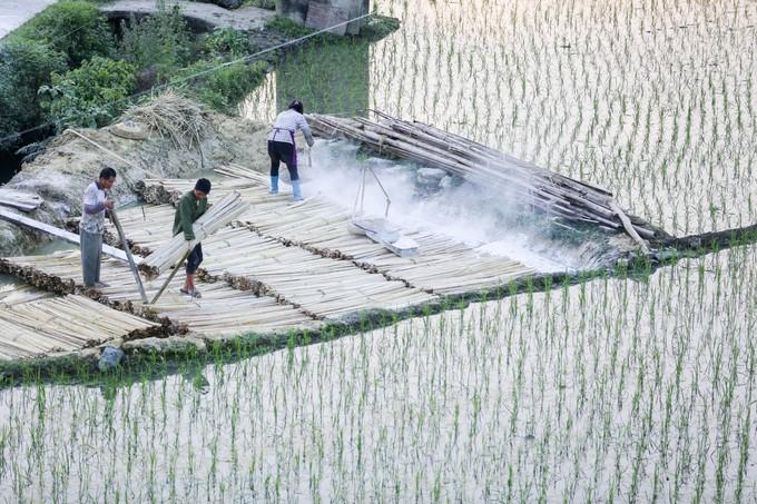 Sau khi vận chuyển về làng, những bó tre được ngâm trong hố nước vôi để đẩy nhanh quá trình phân hủy. Công đoạn này mất khoảng vài ngày, giúp những thân cây mềm ra.