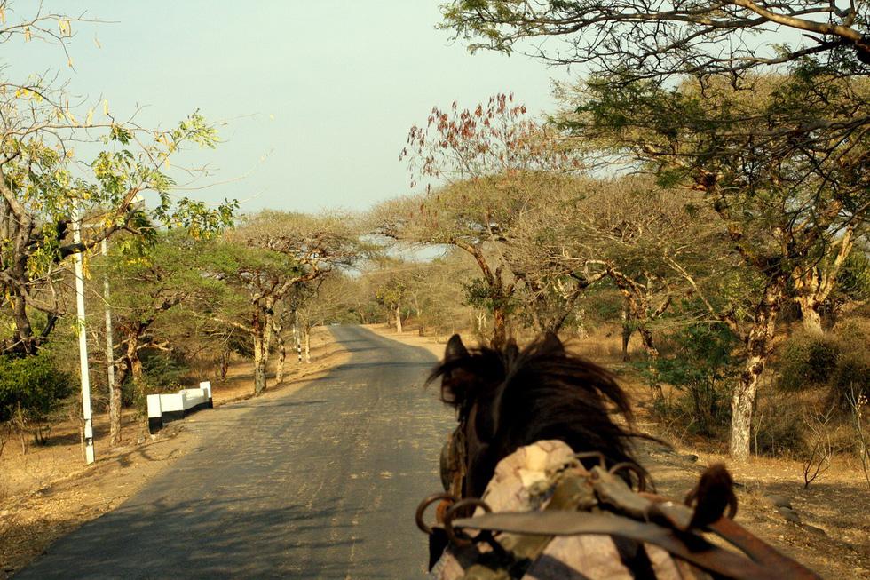 Xe ngựa là phương tiện quen thuộc ở Bagan