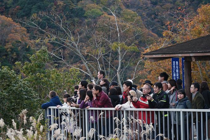 Những khán giả cổ vũ cho màn nhảy bungee của các du khách.