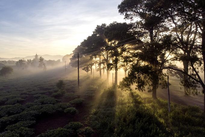 Con đường hàng thông - Biển Hồ chè, chùa Bửu Minh đến cánh đồng Ngô Sơn, núi lửa Chư Đăng Ya được xem là đẹp bậc nhất Gia Lai.