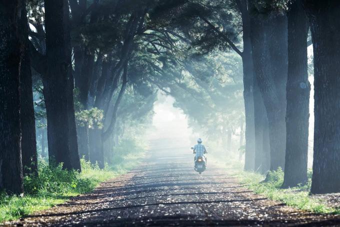Con đường hàng thông đi qua thôn 1, xã Nghĩa Hưng, huyện Chư Pah dài khoảng 800 m với những cây thông trên 100 năm tuổi hai bên đường. Để tới được đây, du khách đi từ ngã tư Biển Hồ về hướng Kon Tum khoảng 3 km rồi rẽ vào đường Lê Văn Sỹ.