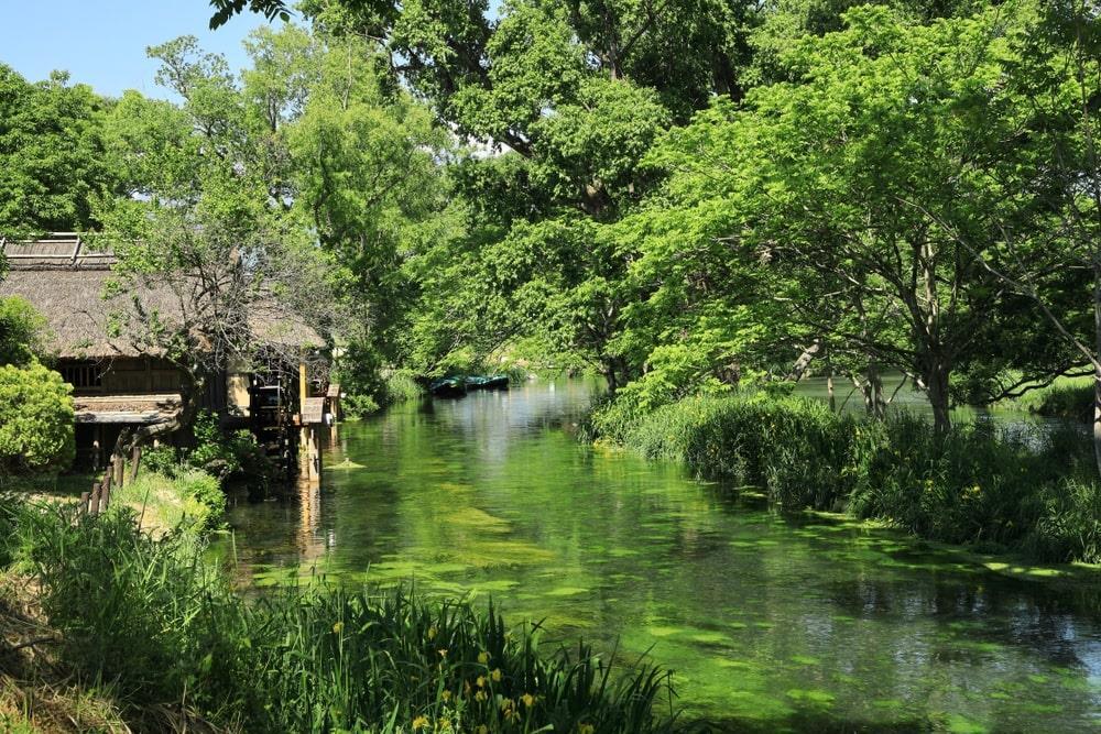 Wasabi là loài cây phát triển trong điều kiện đặc biệt. Chúng cần lượng lớn nước sạch và nhiệt độ không đổi. Bởi vậy, vùng đất sở hữu nhiều cánh đồng lớn được thiết kế tỉ mỉ với hệ thống sông suối nhỏ nhằm duy trì và cung cấp nước liên tục. Ảnh: Hossy8864.
