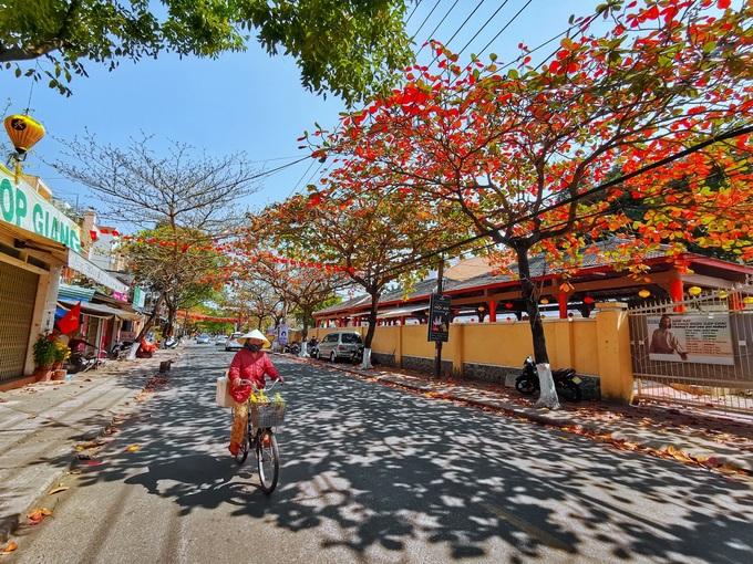 Hội An khác lạ với hàng cây bàng rợp lá đỏ khi thời tiết chuyển mùa.